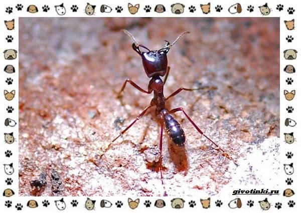 Виды-муравьёв-их-особенности-образ-жизни-и-среда-обитания-14