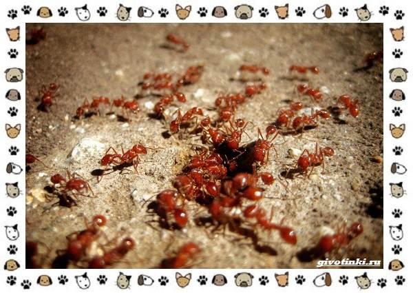 Виды-муравьёв-их-особенности-образ-жизни-и-среда-обитания-18