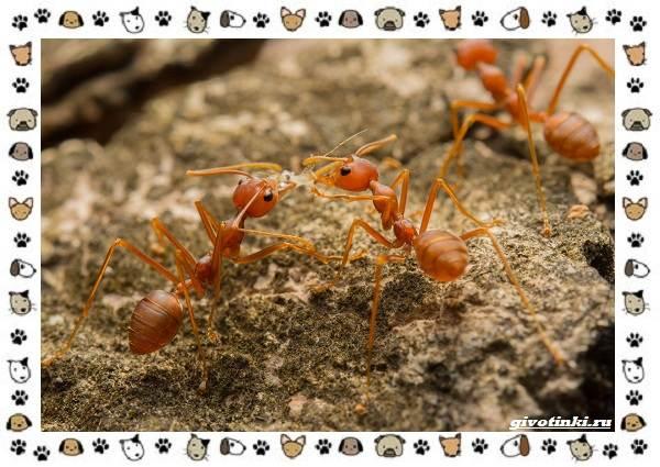 Виды-муравьёв-их-особенности-образ-жизни-и-среда-обитания-19
