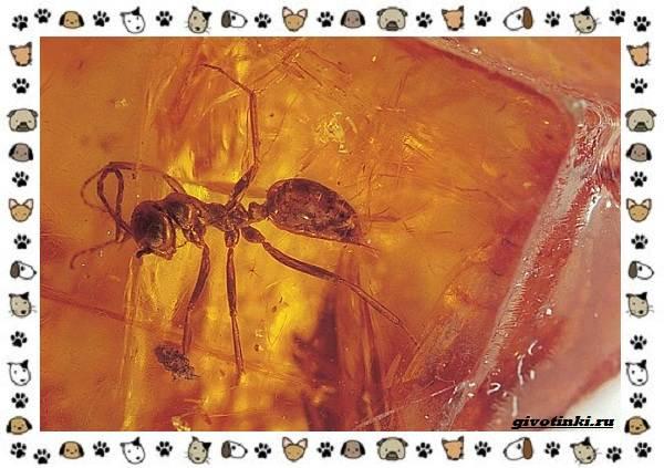 Виды-муравьёв-их-особенности-образ-жизни-и-среда-обитания-2