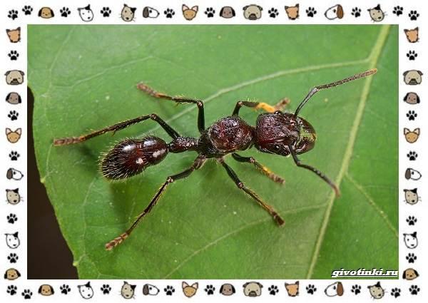 Виды-муравьёв-их-особенности-образ-жизни-и-среда-обитания-20