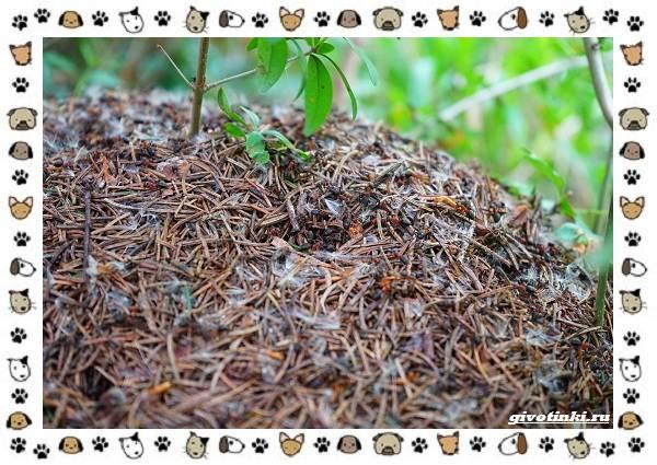 Виды-муравьёв-их-особенности-образ-жизни-и-среда-обитания-21