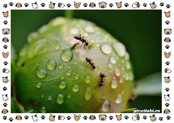 Виды-муравьёв-их-особенности-образ-жизни-и-среда-обитания-22