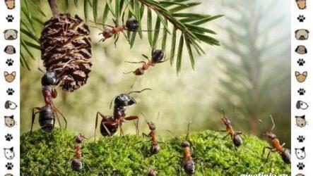 Виды муравьёв: их особенности, образ жизни и среда обитания