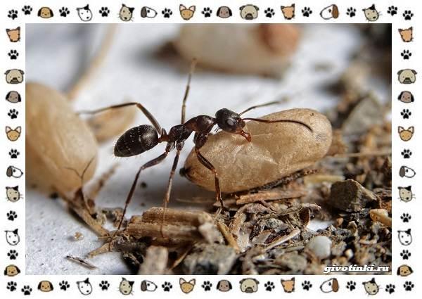 Виды-муравьёв-их-особенности-образ-жизни-и-среда-обитания-8