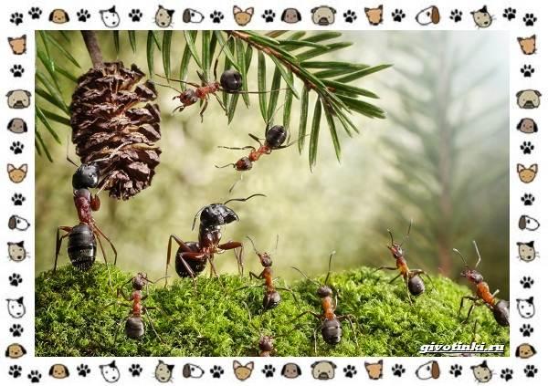 Виды-муравьёв-их-особенности-образ-жизни-и-среда-обитания
