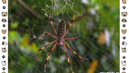 Виды пауков: описание, особенности и образ жизни