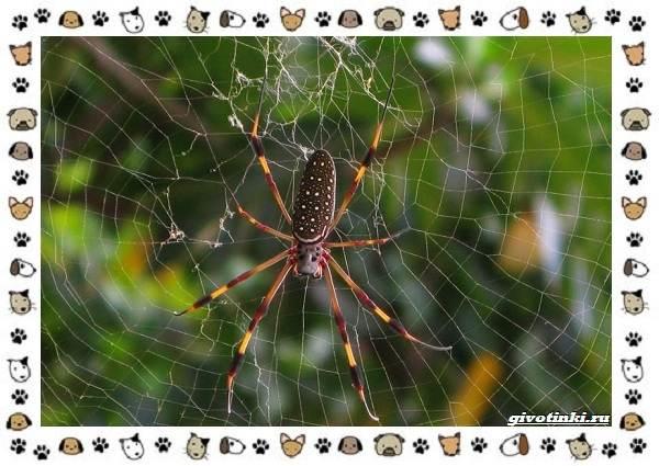 Виды-пауков-описание-особенности-и-образ-жизни-1