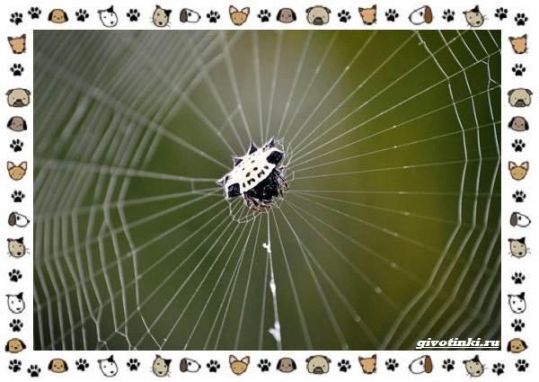 Виды-пауков-описание-особенности-и-образ-жизни-10