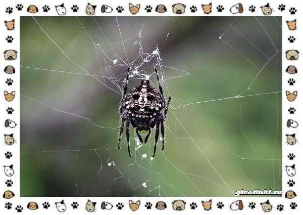 Виды-пауков-описание-особенности-и-образ-жизни-12