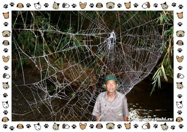 Виды-пауков-описание-особенности-и-образ-жизни-13