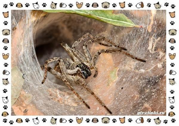 Виды-пауков-описание-особенности-и-образ-жизни-14