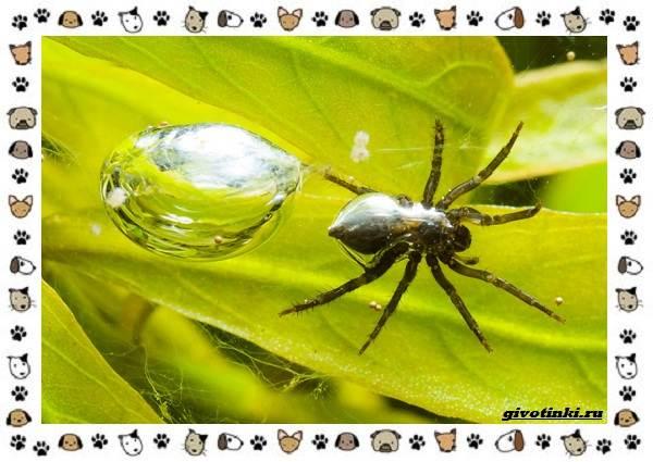 Виды-пауков-описание-особенности-и-образ-жизни-15