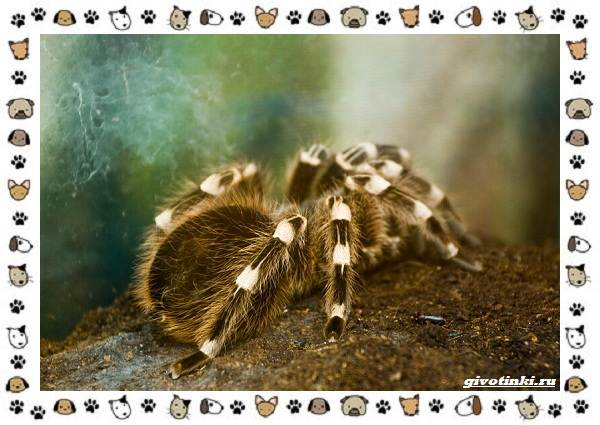 Виды-пауков-описание-особенности-и-образ-жизни-18