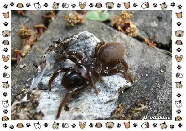 Виды-пауков-описание-особенности-и-образ-жизни-2