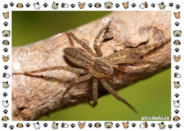 Виды-пауков-описание-особенности-и-образ-жизни-20