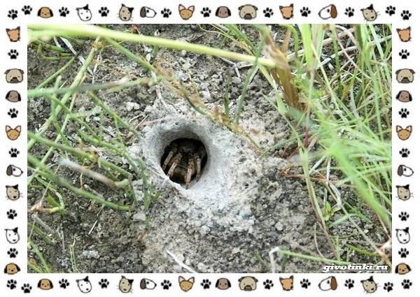 Виды-пауков-описание-особенности-и-образ-жизни-22