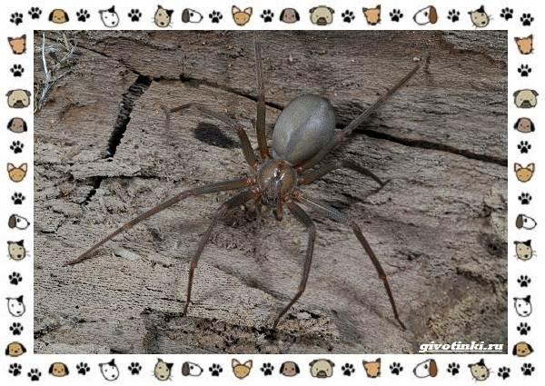 Виды-пауков-описание-особенности-и-образ-жизни-23