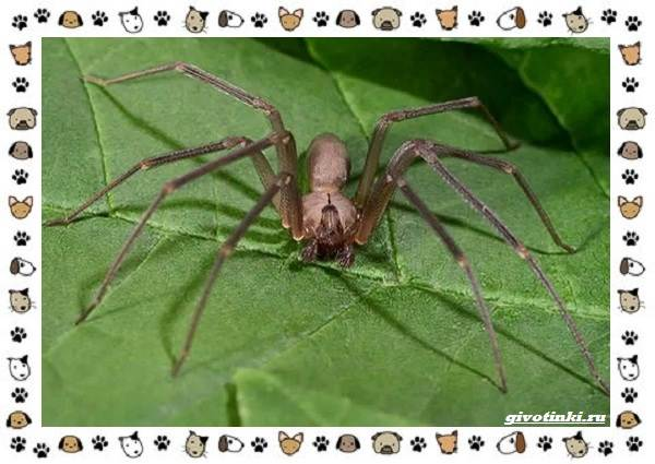 Виды-пауков-описание-особенности-и-образ-жизни-24