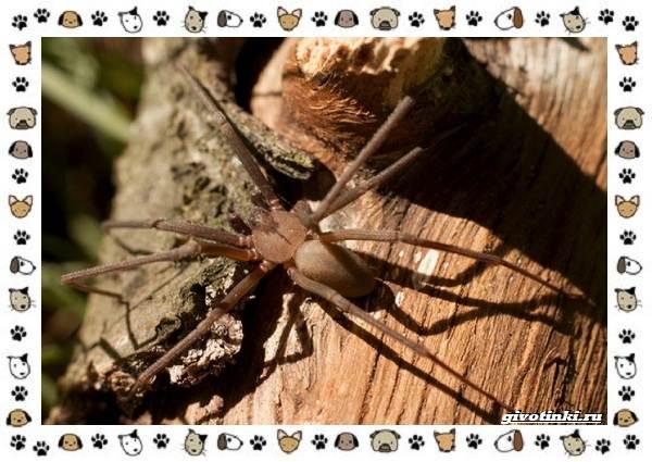 Виды-пауков-описание-особенности-и-образ-жизни-25