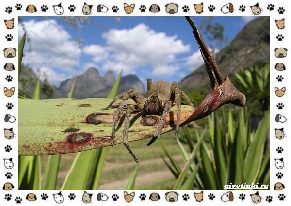 Виды-пауков-описание-особенности-и-образ-жизни-29