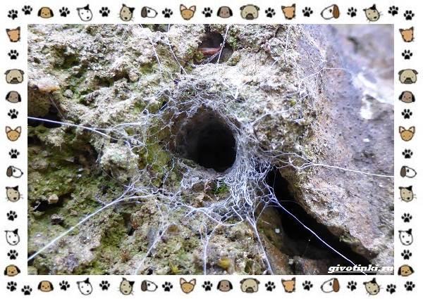 Виды-пауков-описание-особенности-и-образ-жизни-3