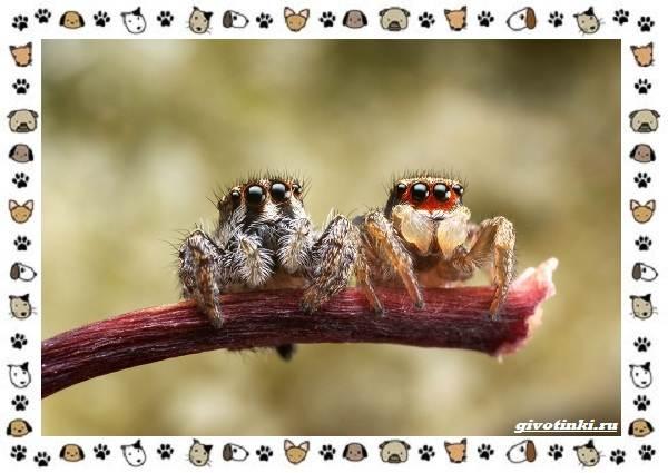 Виды-пауков-описание-особенности-и-образ-жизни-30