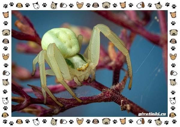 Виды-пауков-описание-особенности-и-образ-жизни-6