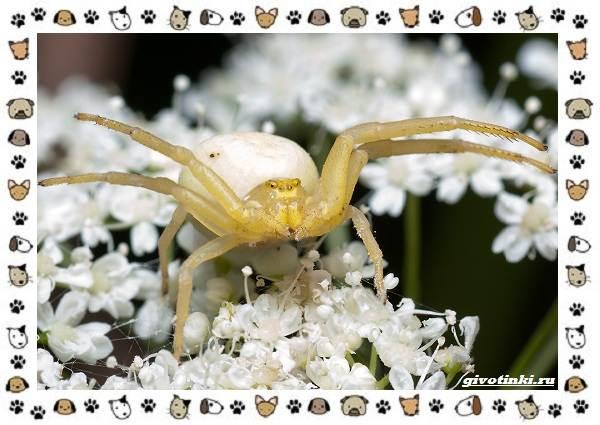 Виды-пауков-описание-особенности-и-образ-жизни-7