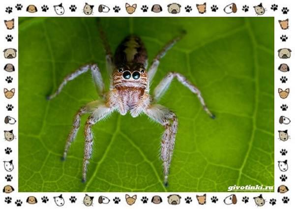 Виды-пауков-описание-особенности-и-образ-жизни-8