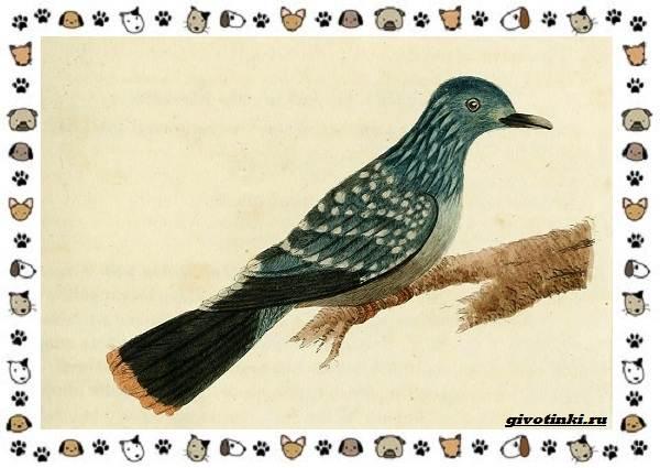 Зелёный-голубь-описание-особенности-и-среда-обитания-птицы-2