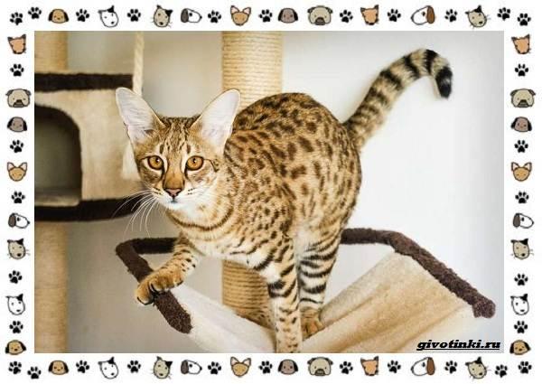 Гибридные-породы-кошек
