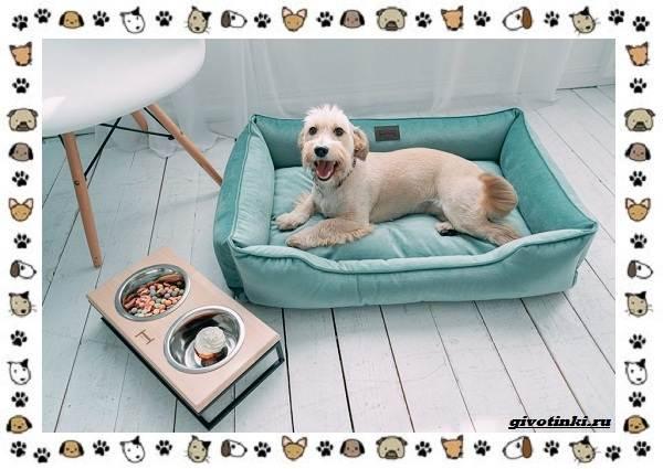 Маленькие-квартирные-собаки-8-пород-для-однокомнатной-квартиры-10