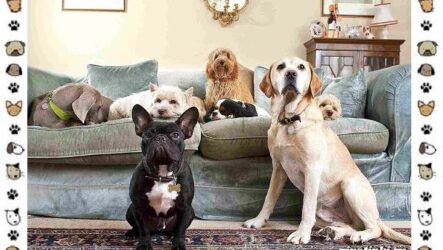 Маленькие квартирные собаки: 8 пород для однокомнатной квартиры