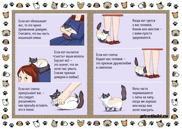 Мяуканье-кошки-или-что-кошка-хочет-сказать-1
