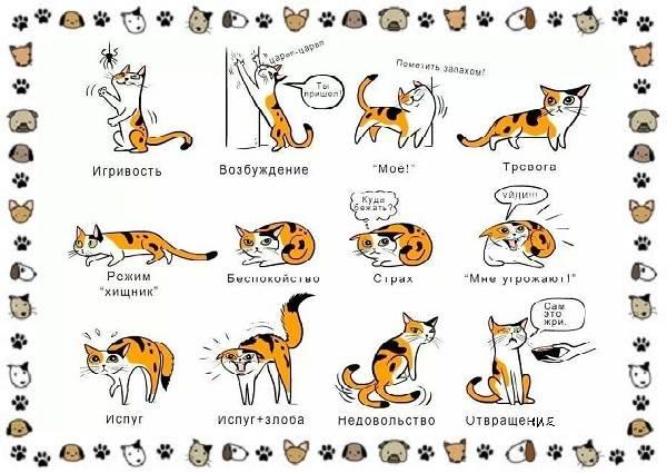 Мяуканье-кошки-или-что-кошка-хочет-сказать-2