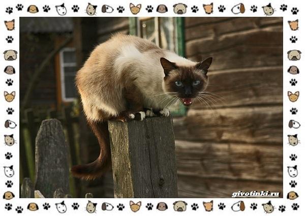 Мяуканье-кошки-или-что-кошка-хочет-сказать-3