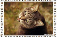 Мяуканье кошки, или что кошка хочет сказать