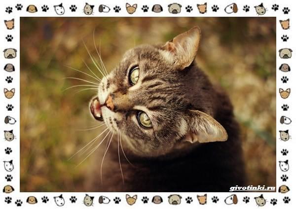 Мяуканье-кошки-или-что-кошка-хочет-сказать-4