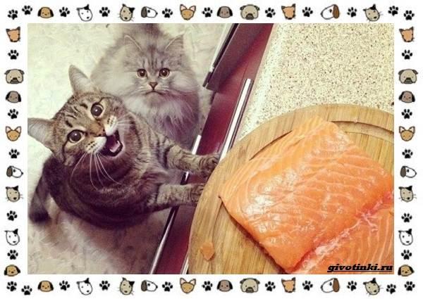 Мяуканье-кошки-или-что-кошка-хочет-сказать-5