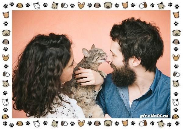 Мяуканье-кошки-или-что-кошка-хочет-сказать-8