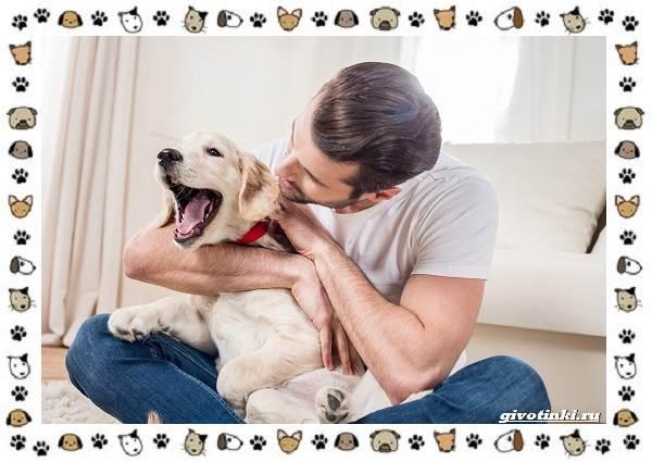 Почему-собака-кусает-себя-за-хвост-9