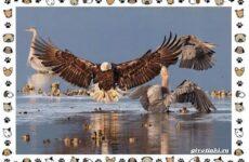 Виды больших птиц: названия, описание и среда обитания