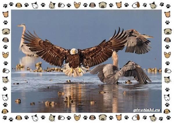 Виды-больших-птиц-названия-описание-и-среда-обитания-1