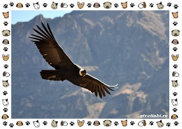 Виды-больших-птиц-названия-описание-и-среда-обитания-11