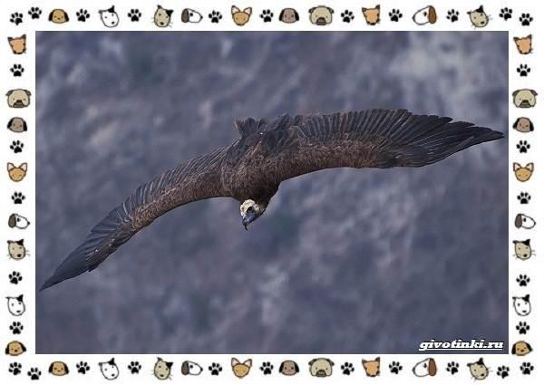 Виды-больших-птиц-названия-описание-и-среда-обитания-13