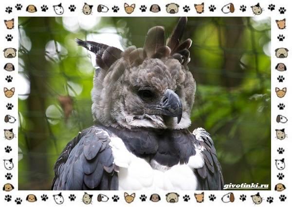 Виды-больших-птиц-названия-описание-и-среда-обитания-14