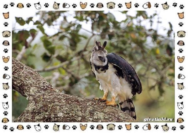 Виды-больших-птиц-названия-описание-и-среда-обитания-15
