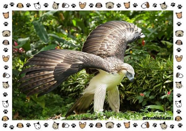 Виды-больших-птиц-названия-описание-и-среда-обитания-16