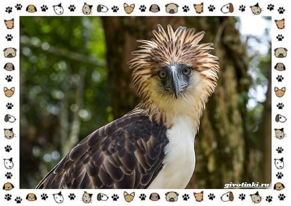 Виды-больших-птиц-названия-описание-и-среда-обитания-17
